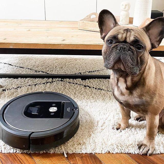 Kutyus vagy robotporszívó? Mi sem tudnánk választani, ezért ha már kutyust nem is, de porszívógépet bármikor rendelhet webshopunkról. Látogasson el az irobot.hu-ra és válassza ki az Önnek legmegfelelőbb társat a házimunkában! #irobot #robotporszívó #takarítás #cleaning #robot